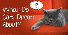 Researchers believe  cats actually dream, which is why some cats seem to be running or swatting something while sleeping. http://healthypets.mercola.com/sites/healthypets/archive/2015/07/06/do-cats-dream.aspx