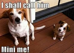 Baby animals are gorgeous but animals and their mini-me twins are more adorable. Here are 15 of our favourite animals and their mini-mes. Baby Animals Pictures, Funny Dog Pictures, Cute Baby Animals, Cute Pictures, Funny Animals, Funny Images, Especie Animal, Mundo Animal, Cute Puppies