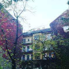 #budapest #pest #ilovebudapest #autumnlove #autumncolours #creeper #colourfull #colours #autumnlover #autumnstyle #nature #naturelove #cityofvibes #citylife #bigcitylife #housedesign #instagardenlove #instaplants #vibes #windows #parthenocissus #botanical #greenwall #wall #gardensofbudapest #gardenstyle #garden Ture Love, Creepers, Garden Styles, City Life, Budapest, Falling In Love, House Design, Windows, Colours