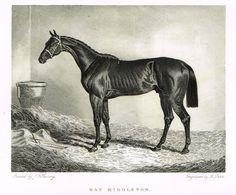 """Ackermann's Sporting Magazine - HORSES - """"BAY MIDDLETON"""" - Steel Engraving - c1838"""