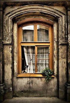 coisasdetere:  Um cão na janela … Provence, France.
