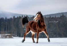 Horses In Snow, Connemara Pony, Horse Photography, Zebras, Beautiful Horses, Animals And Pets, Handsome, Vanity, Winter