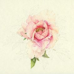 Ellen Blonder - unfinished Peony in colored pencil (I like the unfinished one!)