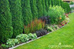 Ogrodowa przygoda Łukasza II - Forum ogrodnicze - Ogrodowisko