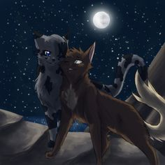 Bottom to top Creekstar tom brave strong clever loyal has all his nine lives mate to wavesplash wants kits great connection with starclan brother to amberfall Wavesplash she cat brave strong loyal wants kits mate to Creekstar is very clever great Hunter great fighter