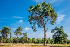 Heidegoed 't Kluenven is ern prachtig natuurterrein waar je heerlijk kunt wandelen. In april kleurt de Beckumer Buitenbeek geel van de exotische moerasaronskelk.