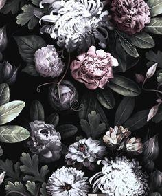 Die 8 Besten Bilder Von Dunkle Blumen Dark Flowers Darkness Und