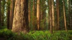 Image result for deep forest tree