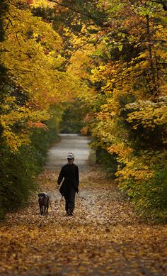 More than 90 miles of trails and greenways offer fantasy-like fall views. Moving To North Carolina, Greensboro North Carolina, North Carolina Homes, Autumn Walks, Carolina Beach, Parks And Recreation, Autumn Trees, Great Places, Paths