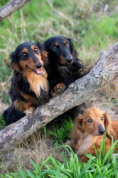 Puppies portrait
