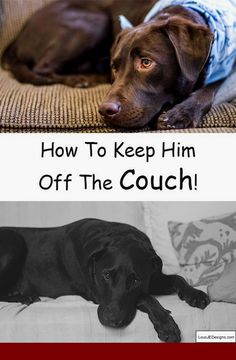 How To Train Your Dog Stay Near You Without A Leash And Pics Of Keep Off