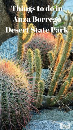 Anza-Borrego Desert State Park in Southern California is the largest park in the continuous states. There is so much to do and something for every taste!