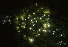 Everbright Solar Fairy Lights - 280 Warm Yellow LEDs - first ones I have found that are a warm colour and not a bright blue-white