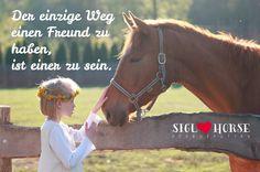 Der einzige Weg einen Freund zu haben, ist einer zu sein. #pferd #pferdeliebe