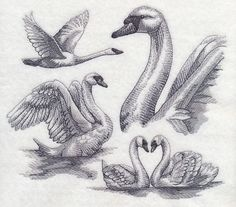 Swan Sketch design (M6012) from www.Emblibrary.com
