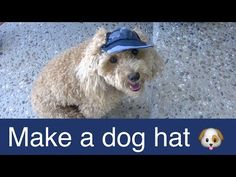Make Dog Visor Hat-Cap-DIY Dog Food/Groom/Clothes - a tutorial by Cooking For Dogs - YouTube