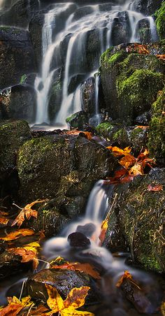 Fairy Falls - Columbia River Gorge - Oregon - USA