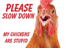 Yard Sign - My Chickens Are Stupid by MyCatsAreStupid on Etsy Sign I, Stupid, Yard, Prints, Etsy, Garten, Courtyards, Tuin, Court Yard