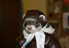 """Houston we have a ferret"" -- hahaha!!"