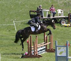 Retired racehorses can fly! #OTTB