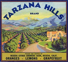 Tarzana Hills Brand citrus crate label, circa 1940. The Tarzana Hills Brand was packed and shipped by the Reseda Citrus Growers Association. West Valley Museum. San Fernando Valley History Digital Library.