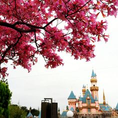 Happiest place on earth during best season of the year.