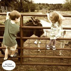 Natural Beauty. Equine Photography by Julia Arnold. {JAEquinePhotography.wordpress.com} #minidonkeys #farmlife #minnesota