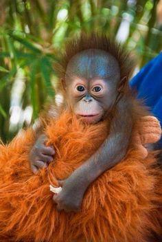 Baby monkey aww