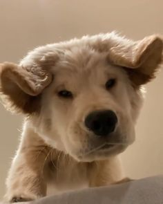 When you accidentally open the front facing camera – Welpen Cute Dogs And Puppies, I Love Dogs, Pet Dogs, Dog Cat, Puppies Puppies, Retriever Puppies, Cute Big Dogs, Cute Little Puppies, Teacup Puppies