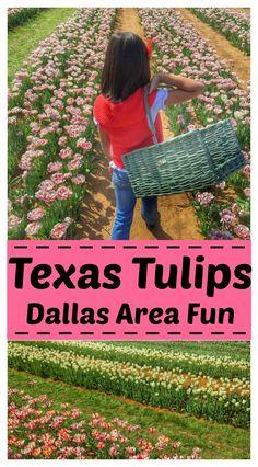 Visit Texas Tulips – A Spring Destination for Dallas Area