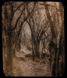 deep dark woods creepy spooky wood art photography , just feels like any minute now some creepy figure is going to peep his face out from behind the trees in the centre....BOOO