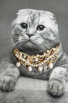 Classy Cats Wearing Jewelry