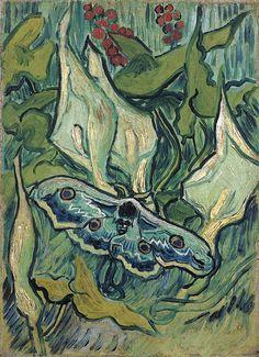 'Great Peacock Moth', 1889 - van Gogh