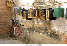 Asia, China, Yunnan Province, Kunming. Caged birds for sale at flea market - Stock Image
