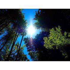 【sky_photographer_japan】さんのInstagramをピンしています。 《#空#sky#skylovers #skyporno#skyviewers #森#forest#与板#長岡市 #オリンパス#olympus #瑞光#zuiko#m.zuiko#omd #microfourthirds#art #写真家#photographer #japan#自然#natural #beautiful#amazing #sky_photographer #photo_pupa》