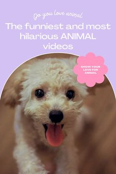 50 funny animal videos to watch with your kids Companion Dog Excellent. follow me for more! #dog #dogs #pet #doglover #doggy #puppy #puppies #puppys #dogoftheday #doglove #dogphotography #dogvideos #dogvideo dog, dogs, doglover Funny Animal Videos, Funny Animals, Companion Dog, Cute Dogs And Puppies, Dog Photography, Super Funny, Dog Days, Funny Dogs, Dog Lovers