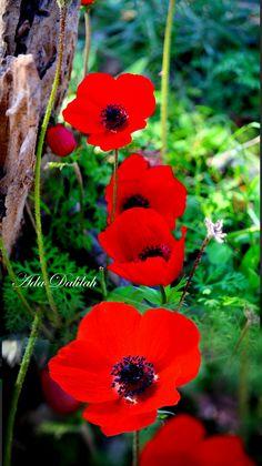 Butterfly Art, Butterflies, Virtual Flowers, My Happy Place, Beautiful Flowers, Wallpaper, Natural, Plants, Beautiful Gardens