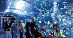 Aquarium of the Americas in New Orleans, Louisiana. What a great place to visit with the family! It's one of the best aquariums we have visited in the world!