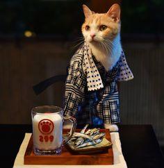 にゃらん @nyalan_jalan  8月10日 温泉上がりの一杯はかくべつなにょだ! #宿の日