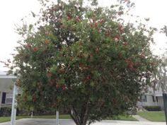 New tree as hurricanes tore down the original one - News - Bubblews