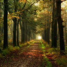 O bo camiño❤️ Camino de Santiago, a pilgrimage across Spain. Beautiful World, Beautiful Places, Beautiful Forest, Amazing Places, Forest Path, Forest Road, Autumn Forest, Pilgrimage, Belle Photo
