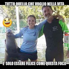 Felice come una foca Seriously Funny, Stupid Funny, Hilarious, Funny Stuff, Funny Images, Funny Photos, Verona, Satirical Illustrations, Italian Memes