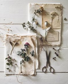Beautiful dried flowers and seed head flatlay Handmade Home, Bloom, Nature Journal, Botany, Dried Flowers, Witch, Creations, Diy Crafts, Crafty