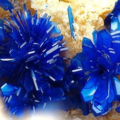 Azurite Flowers in Vug