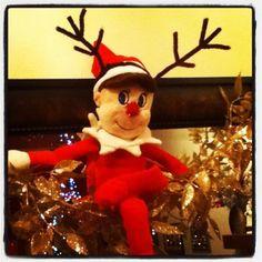 Rudolph Elfie