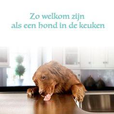 Zo welkom zijn als een hond in de keuken. #spreuk #gezegde