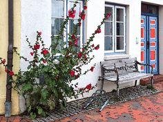 'Mauerblümchen in Glückstadt' von Dirk h. Wendt bei artflakes.com als Poster oder Kunstdruck $18.03