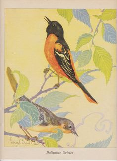 Baltimore Orioles print by Fern Bisel Peat, 1936.