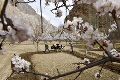 Fabulous spring scenery of the Pamirs