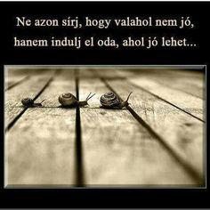 Idézetek Powerful Words, Signage, Quotations, Poems, Wisdom, Quotes, Life, Lets Go, Quote